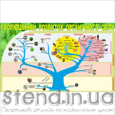 Стенд Еволюційний розвиток органічного світу (270301.3)