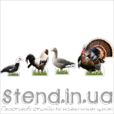 Набір Домашні тварини (22307)