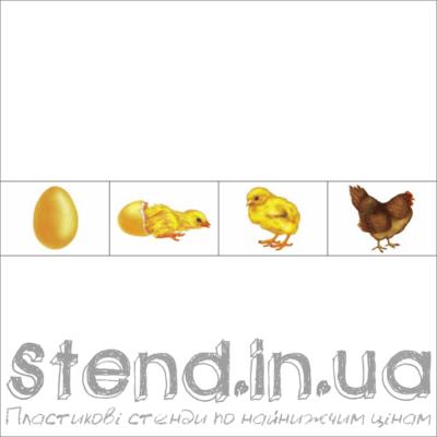 """Набір з 4-х зображень для розміщення на стенді """"Кругообіг життя (22317)"""" (22318.1)"""