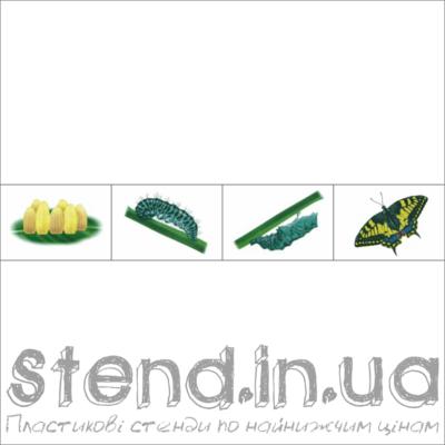 """Набір з 4-х зображень для розміщення на стенді """"Кругообіг життя (22317)"""" (22318.3)"""
