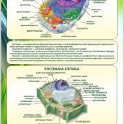 Стенд Будова клітини (270301.12)