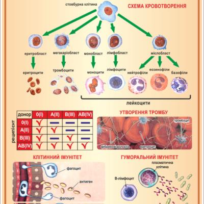 Стенд Формені елементи крові (270301.15)