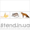 """Набір з 3-х зображень для розміщення на стенді """"Екологічні ланцюги (22315)"""" (22316.1)"""