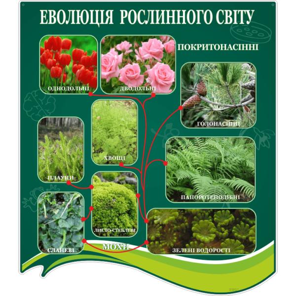 Стенд Еволюція рослинного світу (270301.26)