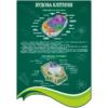 Стенд Будова клітини (270301.28)
