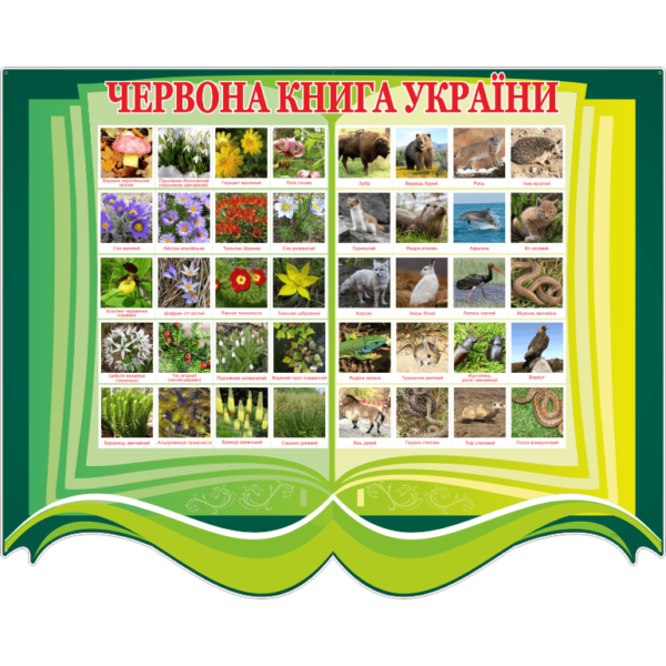 Стенд Червона книга України (270301.30)